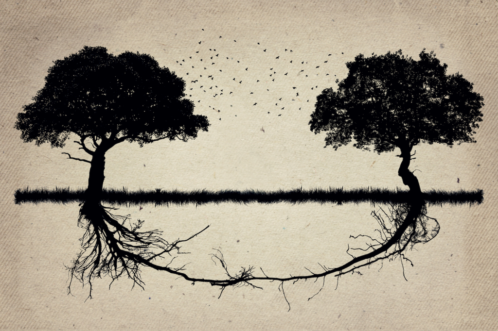 2 tree's roots