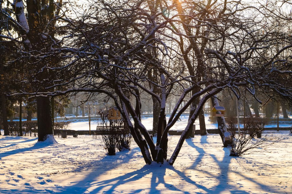 winter tree care tips